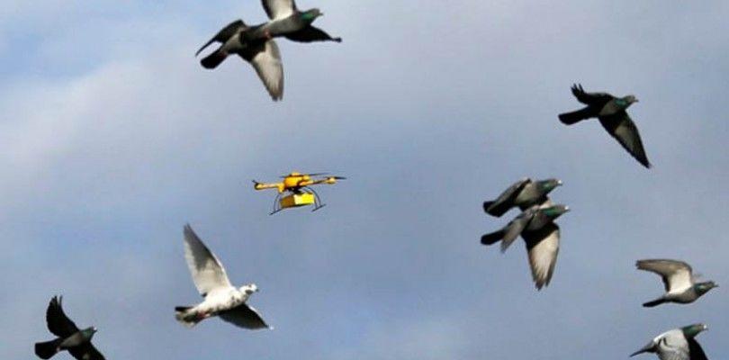 La India podría permitir la paquetería por medio de drones antes que los Estados Unidos