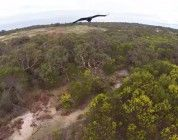 Águila ataca un dron en pleno vuelo